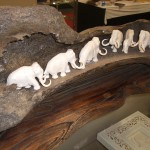 Elephant Display