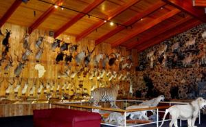 attraction-international-wildlife